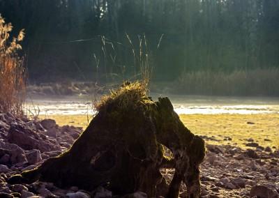 Baumstumpf im See